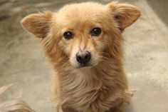 08/26/14~ODESSA SUPER URGENT~Collie mix male 1-2 years old Kennel A27 Available NOW**** $51 to adopt Located at Odessa, Texas Animal Control. Must have a valid Drivers License and utility bill with matching address to adopt. They accept Credit Cards, cash or checks. We ARE NOT the pound. We are volunteers who network these animals to try and find them homes. Please send us a PM if we can answer any questions for you.