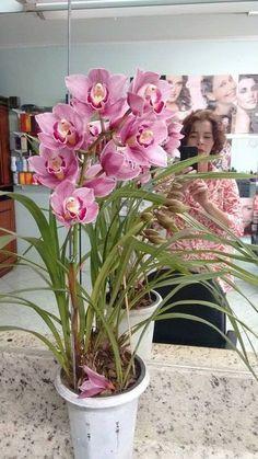 Como salvar uma Orquídea, o que fazer, cuidados a tomar com troca e adub Succulent Gardening, Garden Plants, House Plants, Clay Flowers, Love Flowers, Beautiful Flowers, Orchid Vase, Orchid Plants, Orchid Flowers