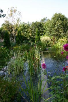 Robin's Nest Aquatics- Natural Swimming Pools