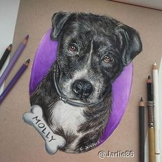 My finished drawing of Molly!    Commission Piece #art #artwork #artist #drawing #pencils #worldofpencils #dog #dogs #dogsofinstagram