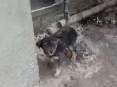 Stop Burning and Killing Dogs in Baku Azerbaijan - Care2 News Network