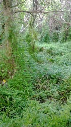 Asparagus scandens Asparagus, Garden Ideas, Herbs, Plants, Studs, Herb, Landscaping Ideas, Plant, Backyard Ideas