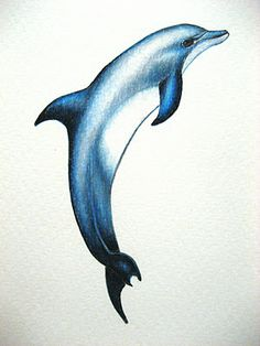 A Drawing a Day for a Year: October 2011 - Dolphin Dolphin Drawing, Dolphin Painting, Ocean Drawing, Dolphin Art, Art Aquarelle, Watercolor Paintings, Art Drawings Sketches, Animal Drawings, Dolphin Images