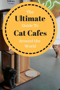 If you're a fan of cats you will love this Ultimate Guide to Cat Cafes Around the World