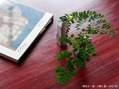 錫花生・流・2個1組・ゆり工房 How To Dry Basil, Herbs, Herb, Medicinal Plants