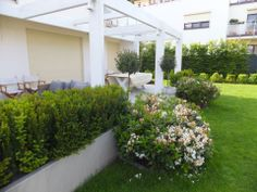 cis w betonowych donicach i rhododendrony
