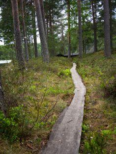 Kalajanvuorelle vaeltamassa. http://retkipaikka.fi/vapaa/yomyota-kalajanvuorella-etela-konneveden-kansallispuisto/