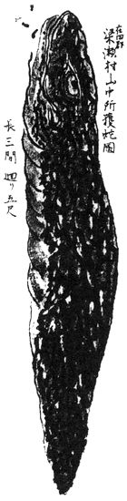 """The Tsuchinoko (ツチノコ or 槌の子?) literally translating to """"hammer's spawn,"""" is a legendary snake-like cryptid from Japan. Mythological Creatures, Mythical Creatures, Mary Celeste, Year Of The Snake, Unexplained Phenomena, Cryptozoology, Design Tutorials, Macabre, Paranormal"""