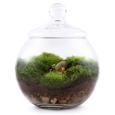 How to Grow Moss For a Terrarium   Make A Terrarium!