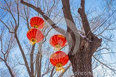 "Four chinese lanterns hanging from a tree in winter with the characters for ""Get a fortune"""