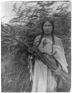 The Rush Gatherer, Edward Curtis. (Antique photo of Native American)