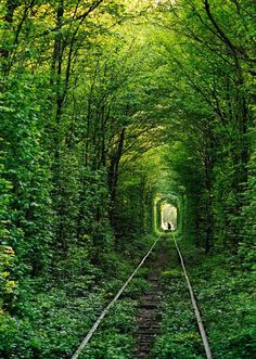 Tunnel of Love: Klevan, Ukraine