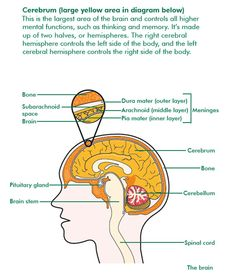 brain cancer diagrams 1000+ images about cancer information on pinterest | cancer, macmillan cancer support and lung ...  #15