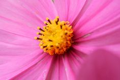 Garden flowers - Extreme closeup - 264