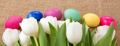 spring white tulips with easter eggs