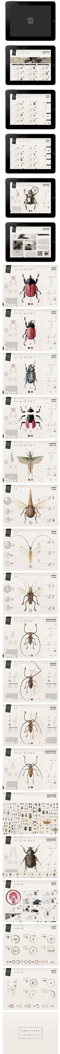 Interactive insect field guide