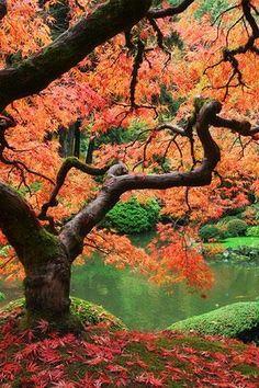 #fall #trees #inspiration