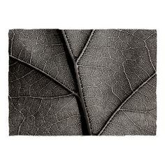 Detail leaf in artistic black and white Dinner Pla> Black and white leaf veins> Victory Ink Tshirts and Gifts