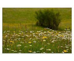 'Sommerwiese' von lisa-glueck bei artflakes.com als Poster oder Kunstdruck $18.71