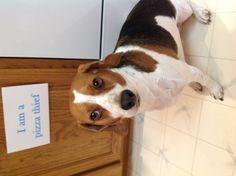 Moku: Beagle Pizza Thief