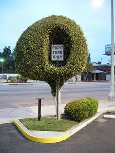 right turn only tree