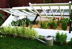 Cold frames offer an additional layer of protection for winter vegetables.
