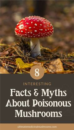 If you are a mushroom hunting beginner, one of the most important things you should know is how to identify poisonous mushrooms. There are plenty of myths about mushrooms and some of them have deadly repercussions when believed to be right. | Discover more about medicinal mushrooms at ultimatemedicinalmushrooms.com #huntingformushrooms #foragingmushrooms #mushroomfacts Poisonous Mushrooms, Edible Mushrooms, Stuffed Mushrooms, White Mushrooms, Mushroom Hunting, Fun Facts, Stuff Mushrooms, Funny Facts