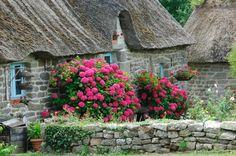 Chamières et hortensias - Finistère Bretagne - Yannick le Gall