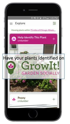 Spring is Coming. Are you ready? Check out GrowIt! the hottest app in the world of plants. Have plants identified or just see what people are growing around you. Available for iPhone and Android!