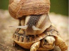 Aprendé a cuidar a tu tortuga de tierra  [Megapost]