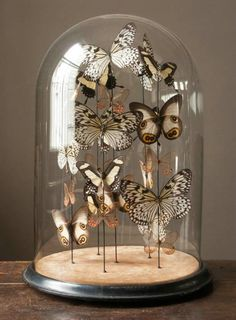 Brown spot butterfly dome, a collection of butterflies so artfully put together...