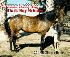 Pictures of Brindle Horses