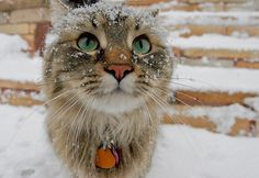 Two things I love - cats and snow :)