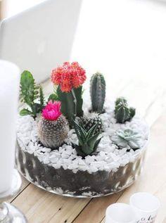 A DIY Tabletop Cactus & Succulent Garden is not as hard to do, as you might thin. A DIY Tabletop C Small Cactus Plants, Cactus House Plants, Cacti And Succulents, Planting Succulents, Succulent Gardening, Garden Terrarium, Succulent Terrarium, Tabletop, Diy Garden