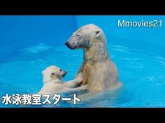 Swimming school start,Polar Bears ララの水泳教室始まる - YouTube