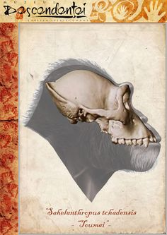 Sahelanthropus tchadensis - by Eduard Olaru