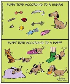 How true is this!  #PetToys