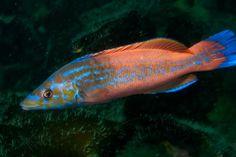 gayano Pesca submarina en apnea - La guía mas completa para principiante