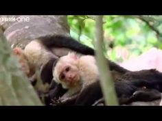 hilarious british animal voice overs