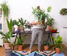 Sprinklr | De mooiste planten, snel bij je thuisbezorgd