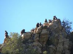 The local residents gathered on a hill