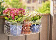 Descubra quais plantas podem ser cultivadas em varandas de apartamento, com as dicas do Blog Mara!