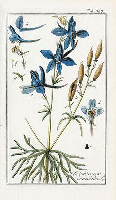 Johannes Zorn Flower & Herb Prints 1779