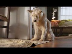 I love these ads. The dog is super cute (one ear up and one down!) and the story lines are good!