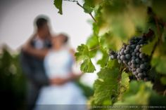 Wedding photoshot at Mokos Winery's wineyard
