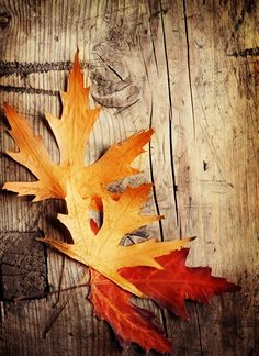 Autumn Leaves On A Rustic Wooden Surface Colors And Shapes Are So Beautiful