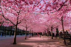 Ruas floridas Estocolmo, Suécia