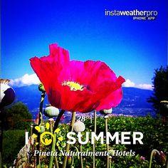 Buon pomeriggio al sole!!! Cosa C'e' di meglio che un riposino tra i fiori?! #pinetActivity