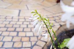 Gardenplaza - In wenigen Arbeitsschritten zum neuen Untergrund im Außenbereich