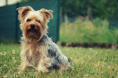 Timmy Boy by Gerry_Pics, via Flickr